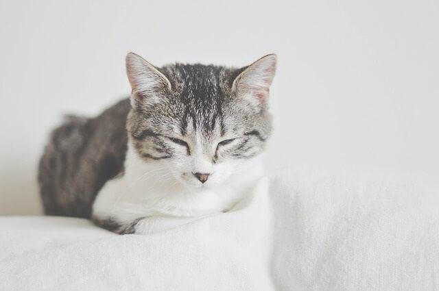Cats Say 'I Love You' by Blinking Slowly