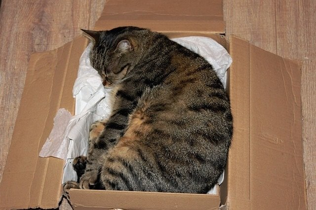 Should You Give Your Cat a Cardboard Box