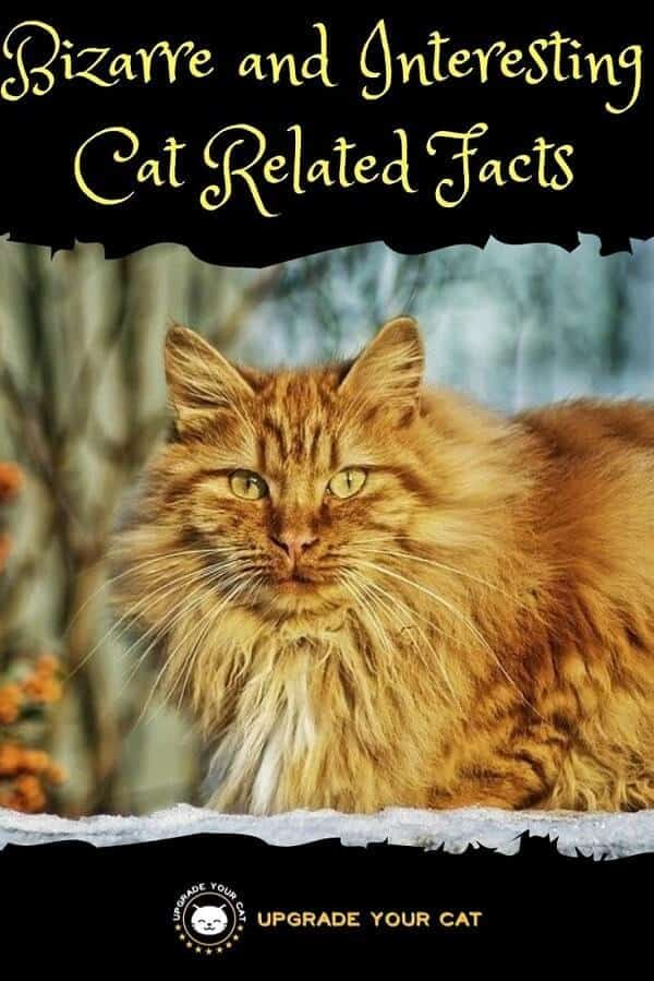 Bizarre and Interesting Cat Related Facts
