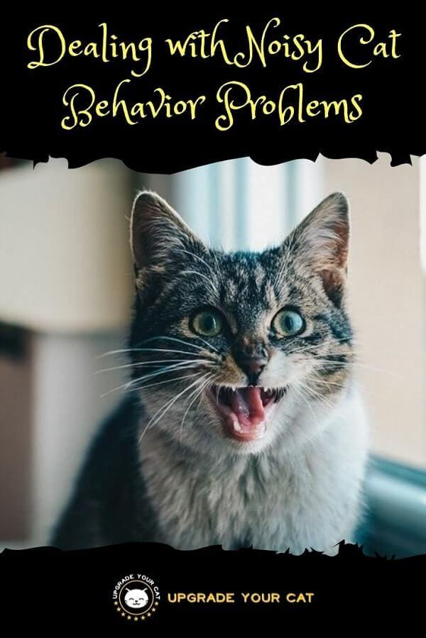 Dealing with Noisy Cat Behavior Problems