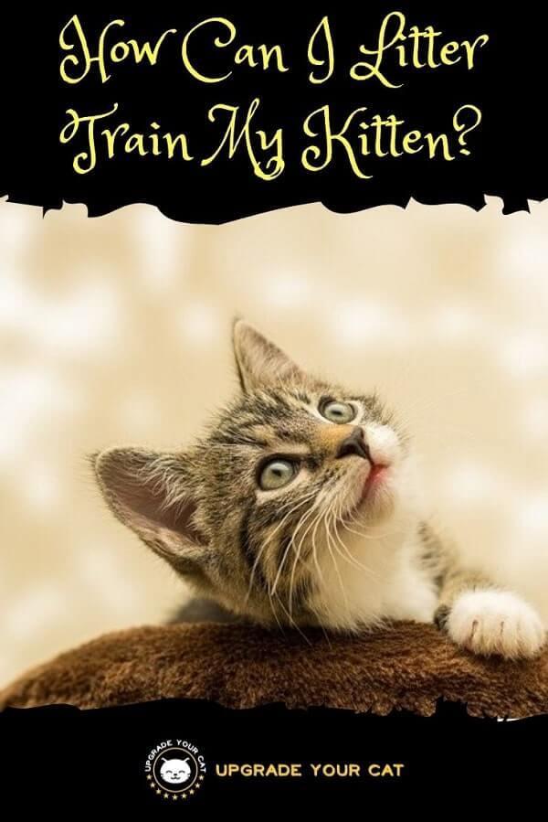 How Can I Litter Train My Kitten