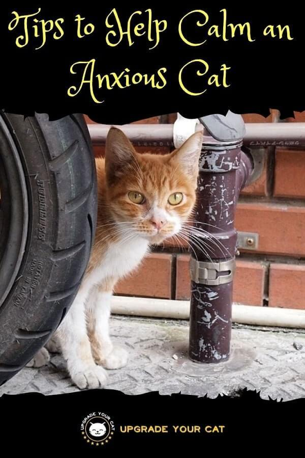 Tips to Help Calm an Anxious Cat