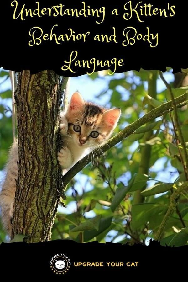 Understanding a Kittens Behaviour and Body Language