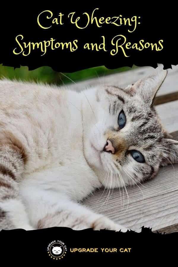 Cat Wheezing Symptoms and Reasons