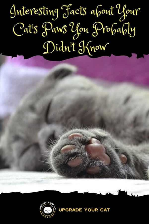 Interesting Facts about Your Cats Paws You Probably Didnt Know