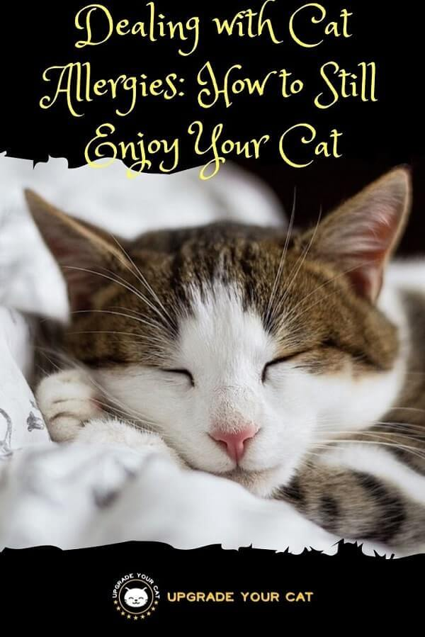Dealing with Cat Allergies How to Still Enjoy Your Cat