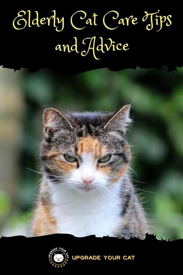 Elderly Cat Care Tips and Advice