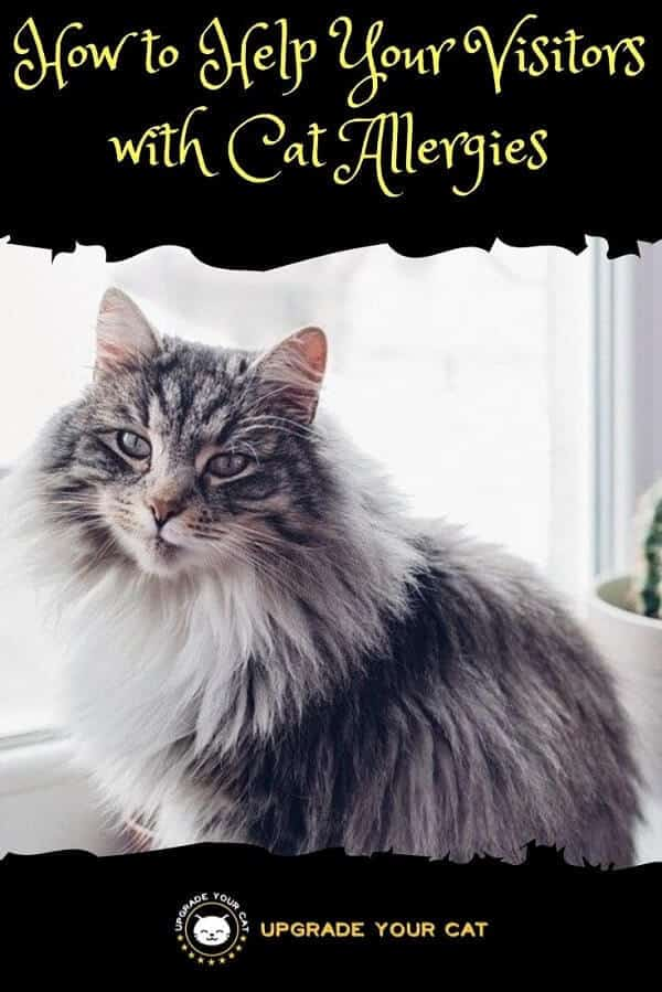 How to Help Your Visitors with Cat Allergies