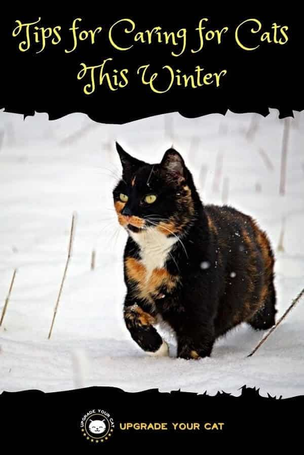 Tips for Caring for Cats This Winter