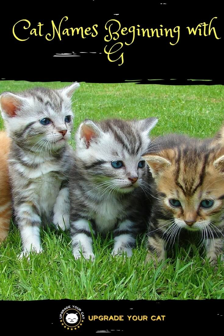 Cat Names Beginning with G