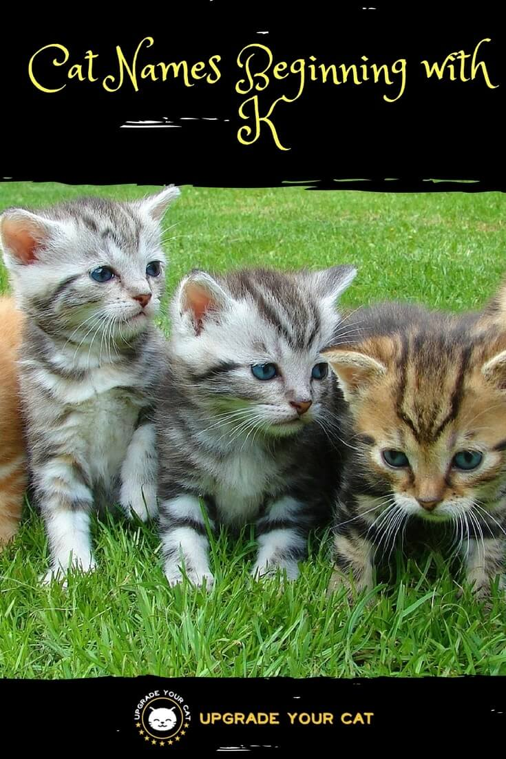 Male Cat Names Beginning with K
