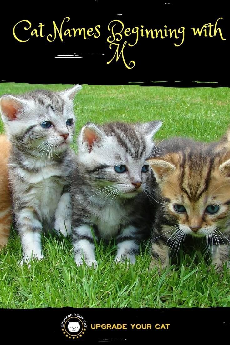 M Cat Names Cat Names Begin...