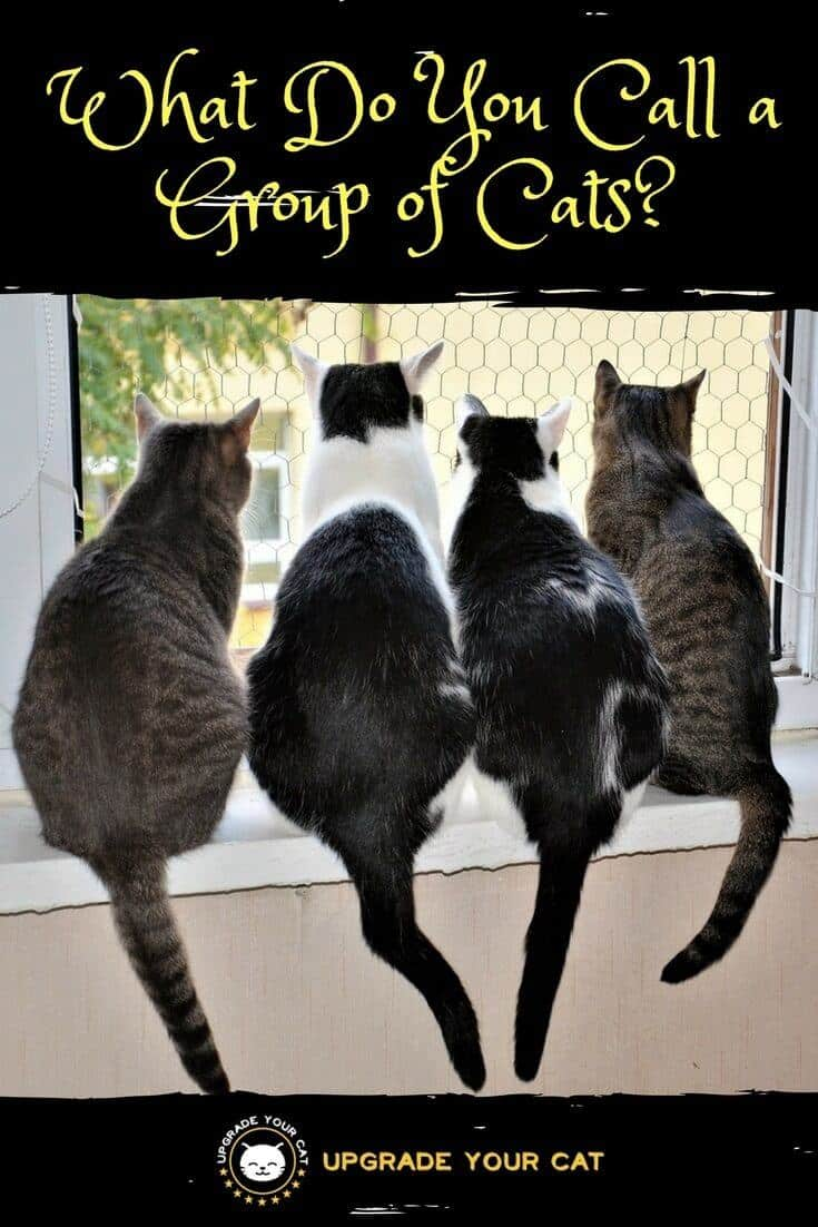 What Do You Call a Group of Cats