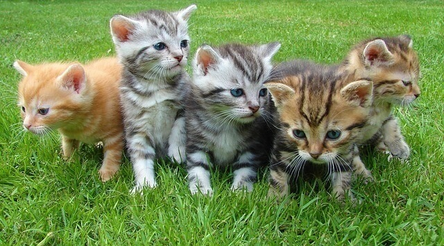 What do you call a group of kittens
