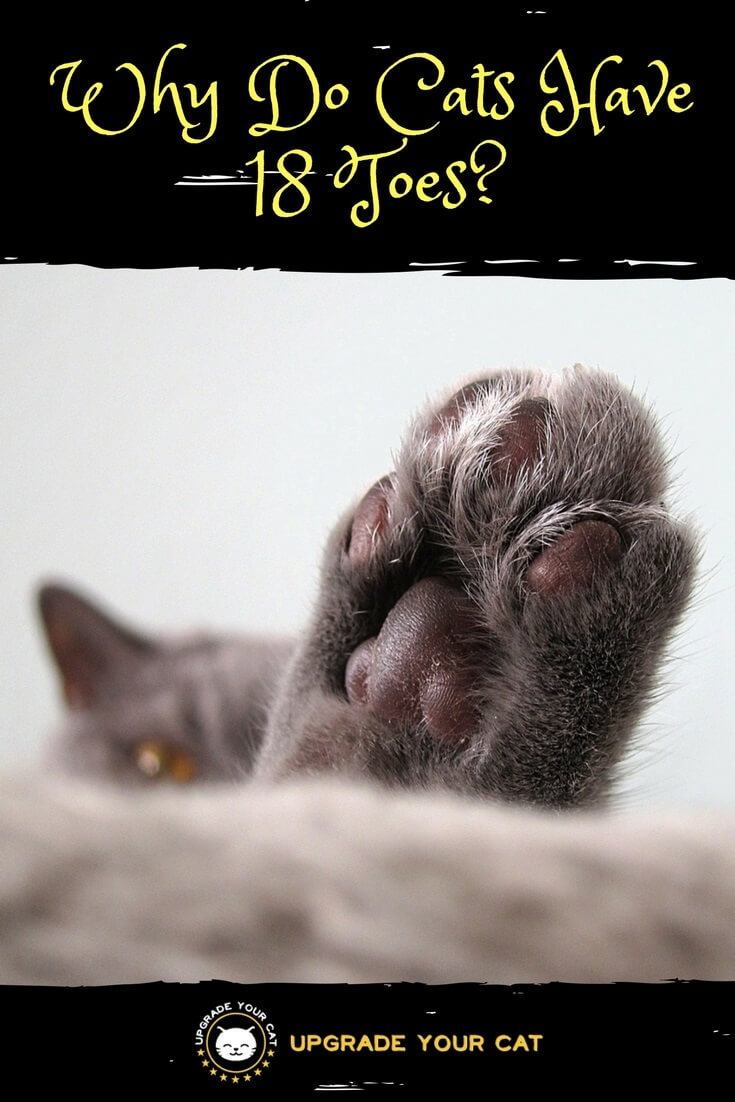 Why Do Cats Have 18 Toes