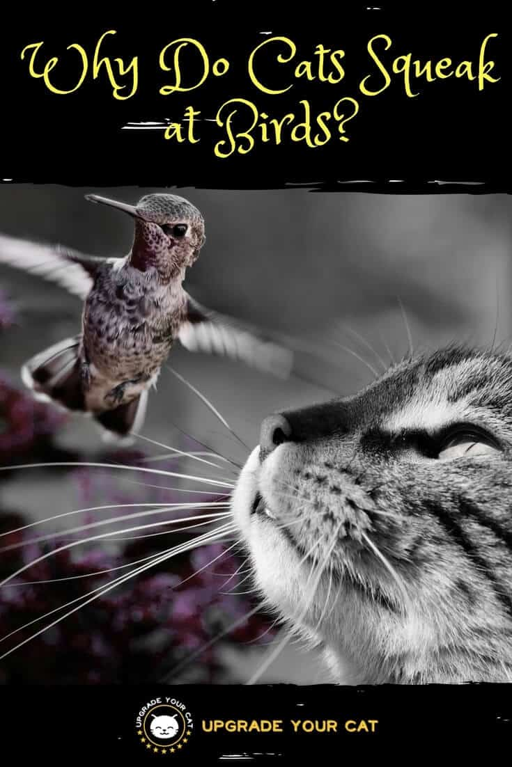 Why Do Cats Squeak at Birds