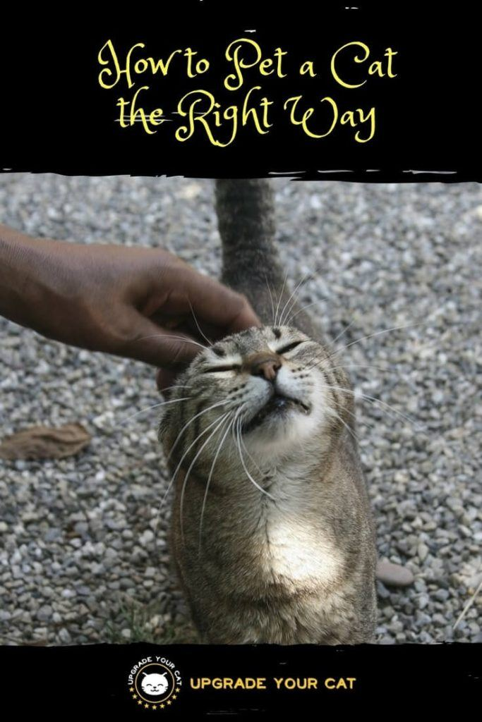 How to Pet a Cat the Right Way