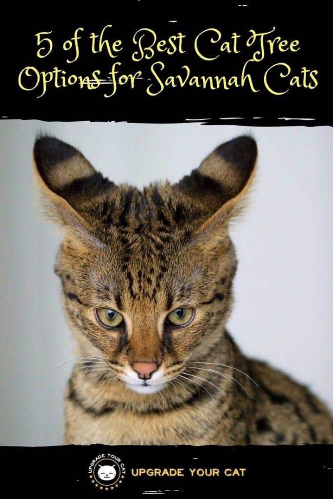 Best Cat Tree for Savannah Cats