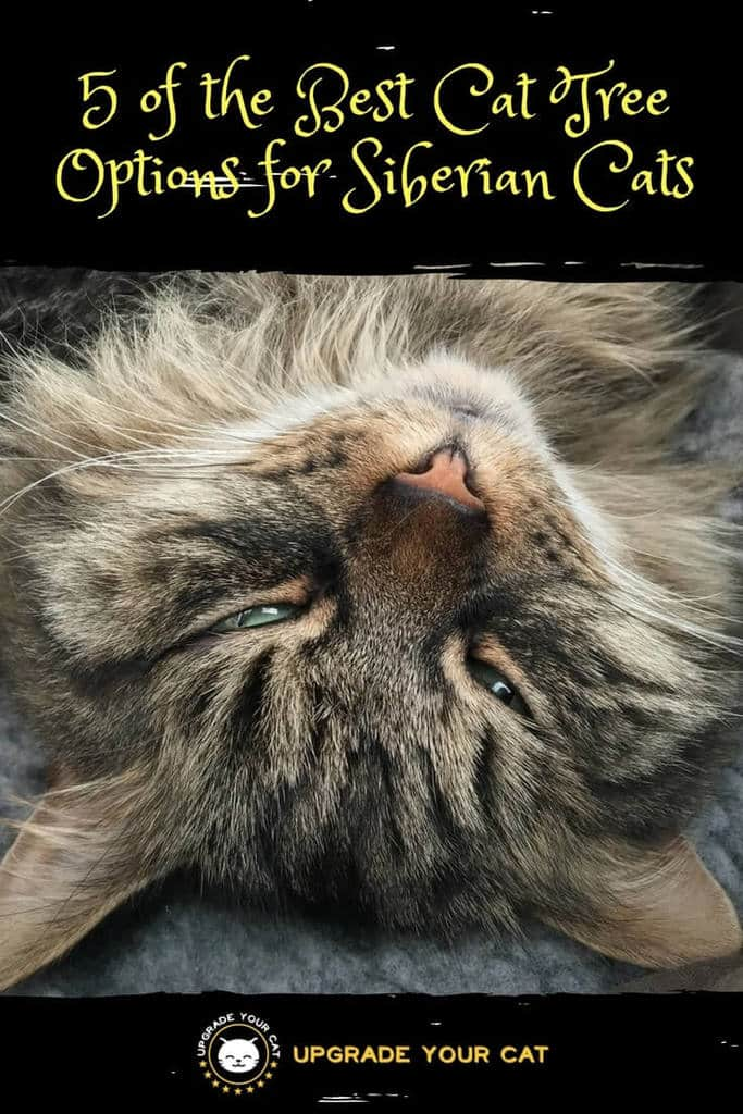 Best Cat Tree for Siberian Cats