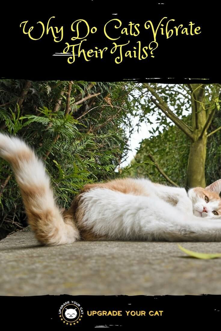 Why Do Cats Vibrate Their Tails