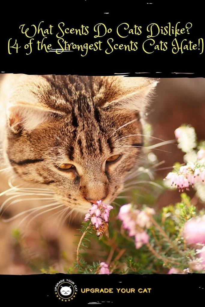 What Scents Do Cats Dislike