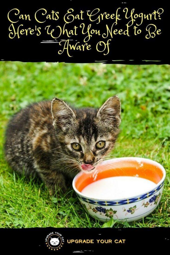 Can Cats Eat Greek Yogurt