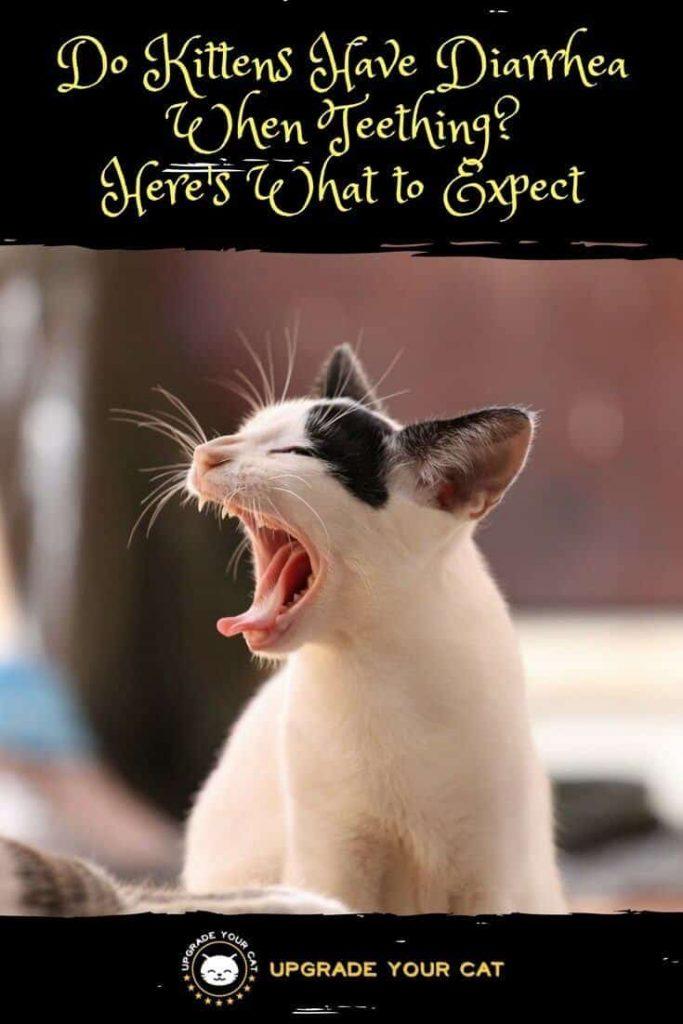 Do Kittens Have Diarrhea When Teething