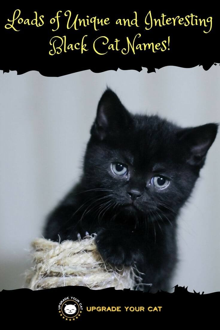 Huge List of Unique Black Cat Names - Upgrade Your Cat