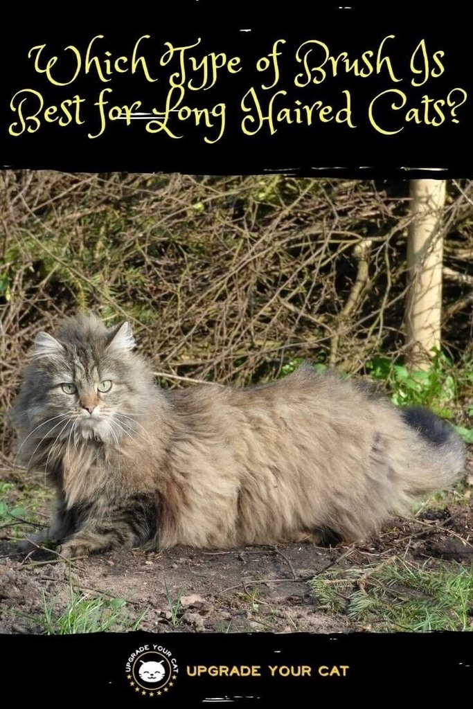 Which Type of Brush Is Best for Long Haired Cats
