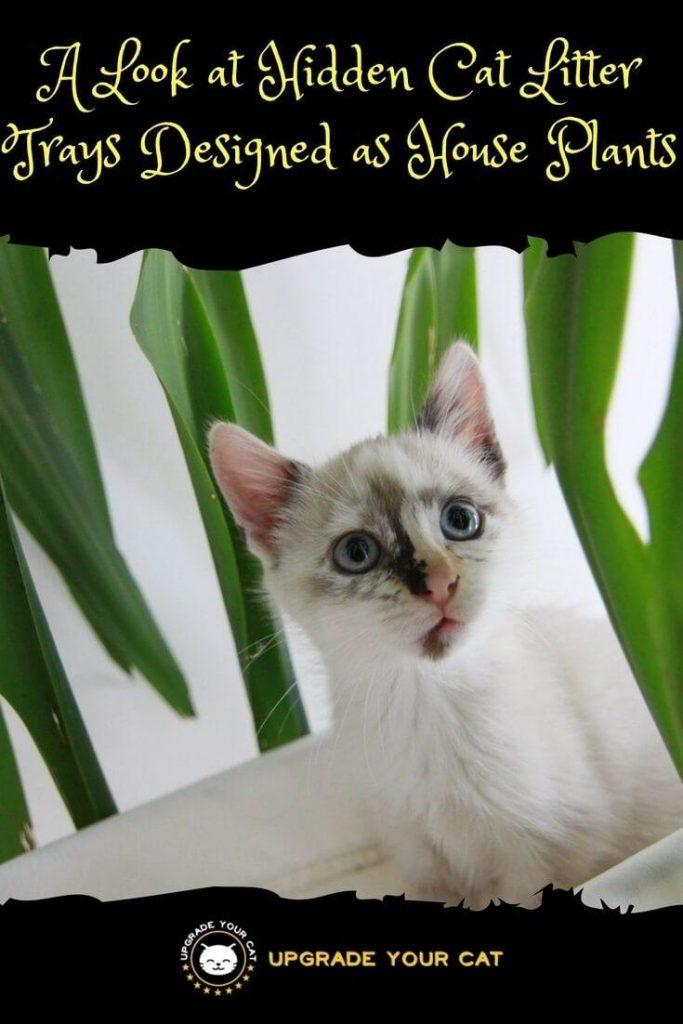 Hidden Cat Litter Tray That Looks like a Plant
