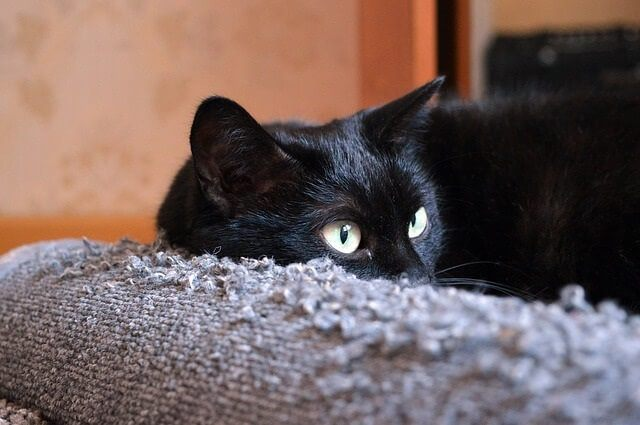 Using scents and things to stop cats scratching your furniture