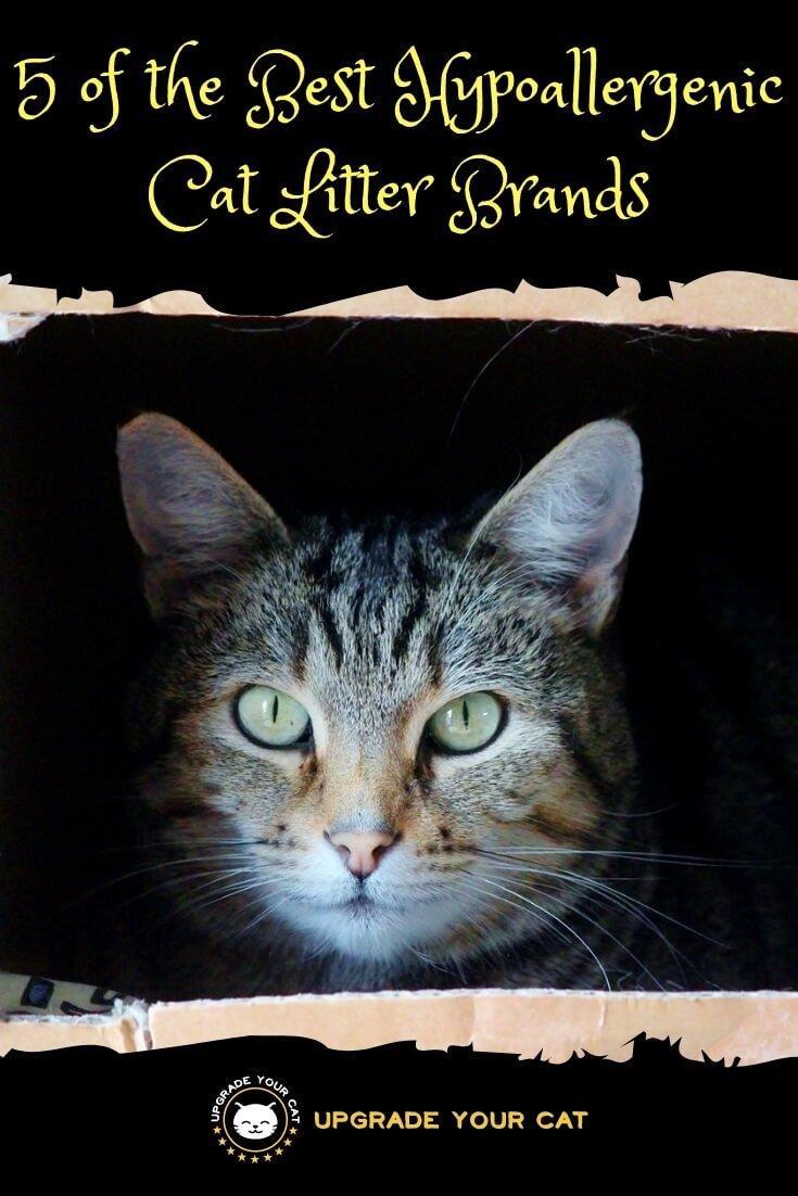 5 of the Best Hypoallergenic Cat Litter Brands
