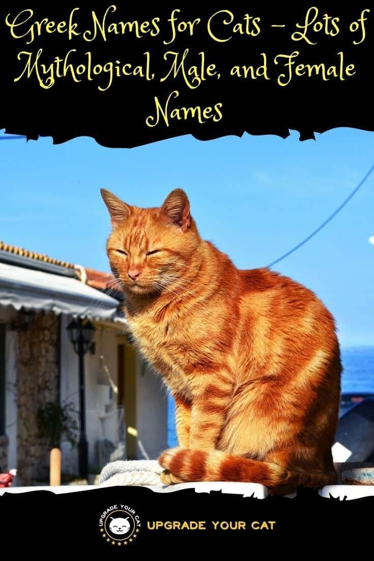 Greek Cat Names: Mythological, Male, Female, and Awesome