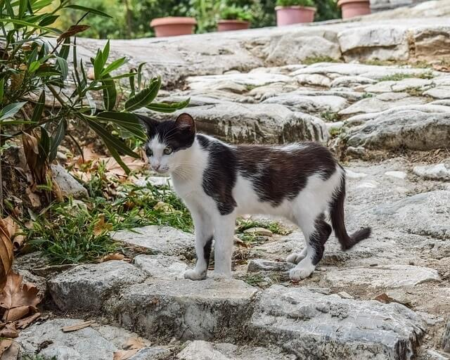 Greek Names for Female Cats