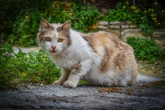 What Is the Best Treatment for Hyperthyroidism in Cats
