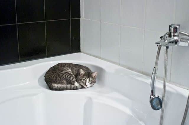 cats drink out of toilets because of convenience