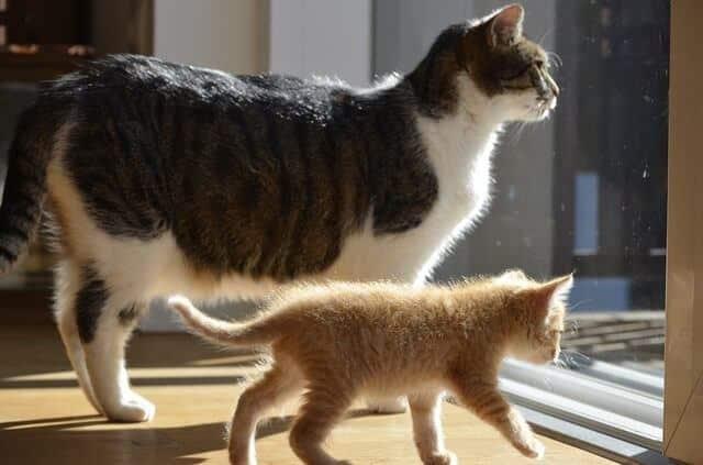 Multi-Cat Household Dynamics