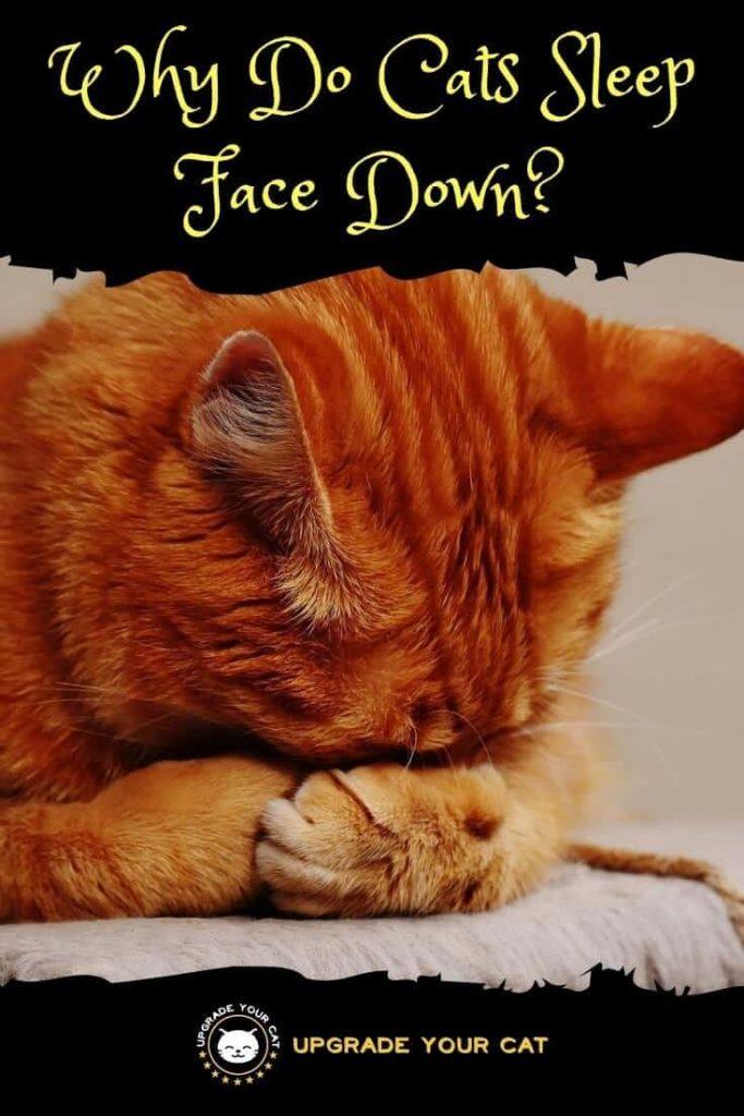 Why Do Cats Sleep Face Down