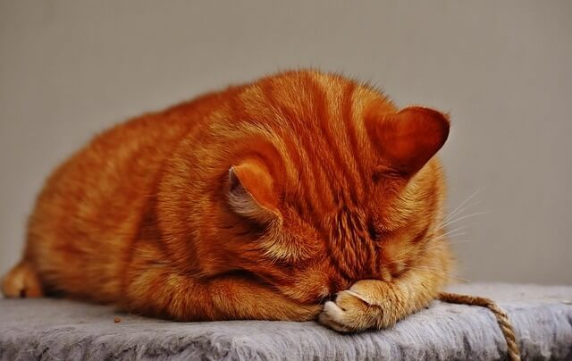 Why does my cat hide his face when sleeping