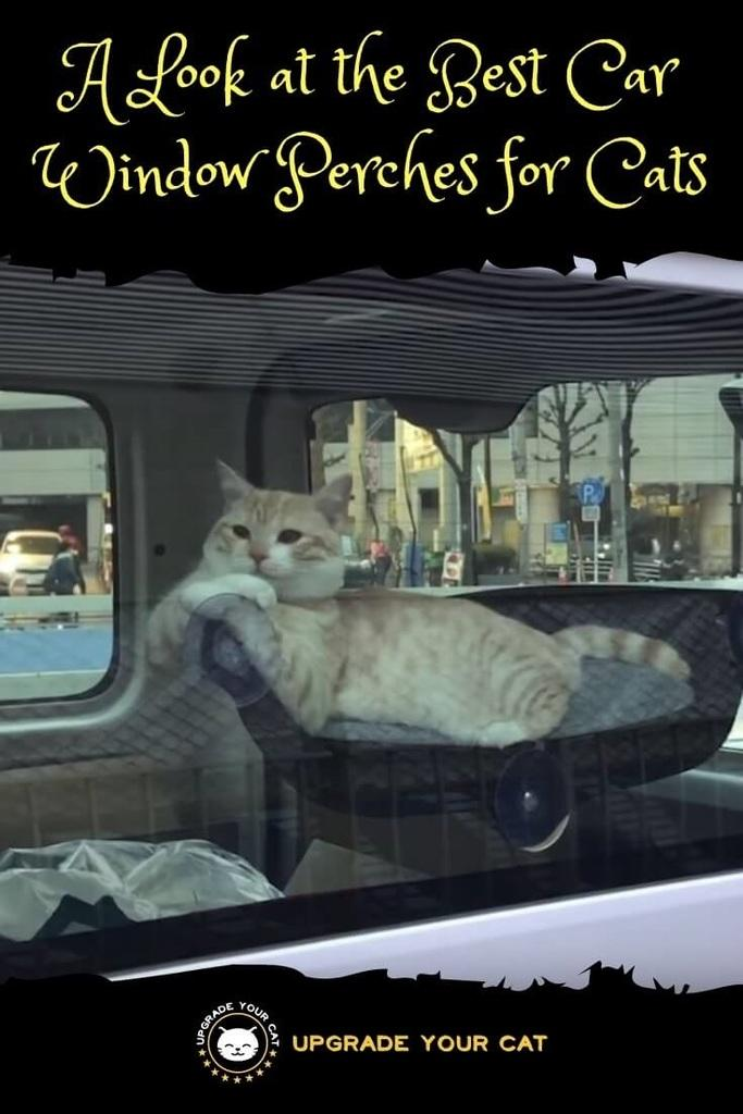 Best Car Window Perch for Cats