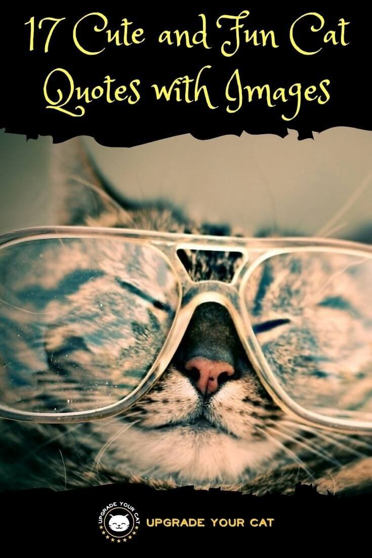 Cat Quotes   17 Cute And Fun Cat Quotes With Images Upgrade Your Cat
