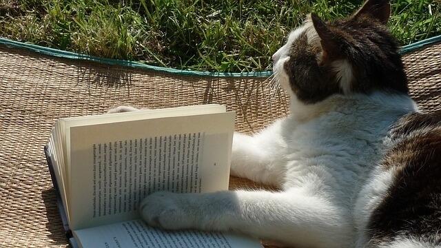 Cat reading marvel comics and books