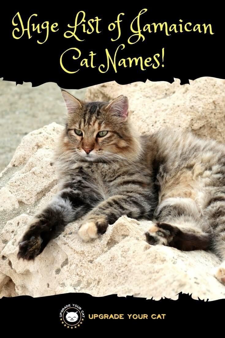 Jamaican Cat Names