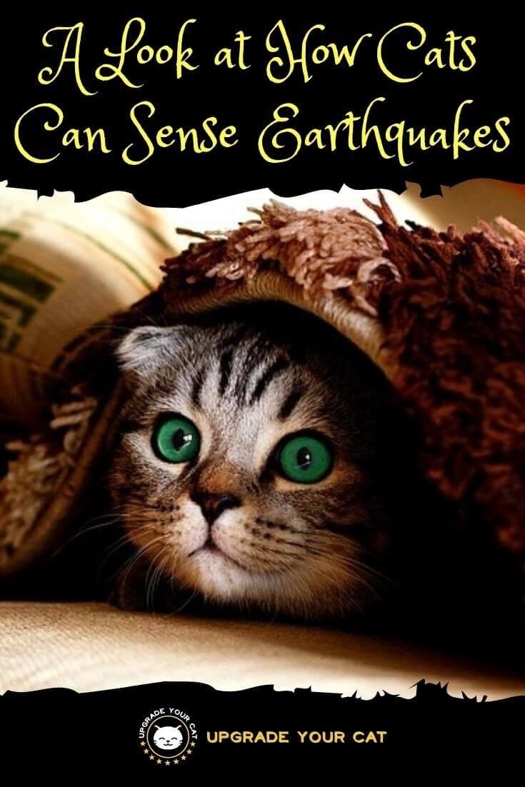 Can Cats Sense Earthquakes