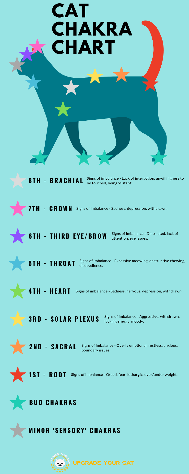 Cat Chakra Chart Infographic