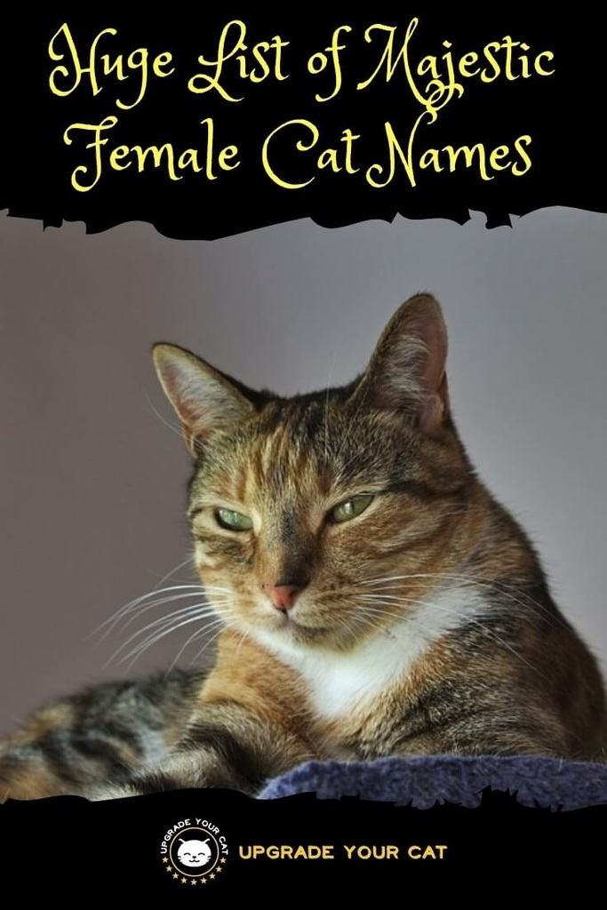 Majestic Female Cat Names