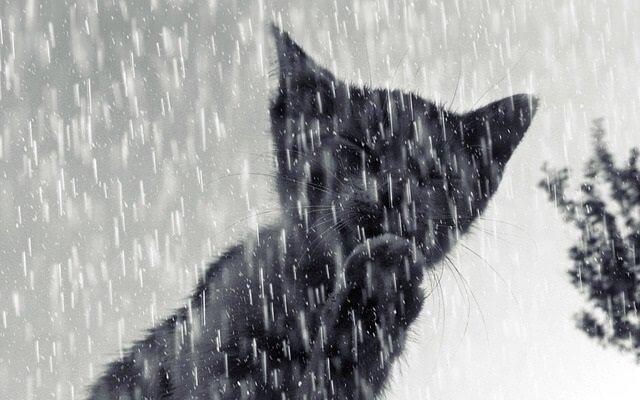 Are Cats Ok in the Rain