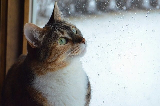 Can Cats Sense When It's About to Rain