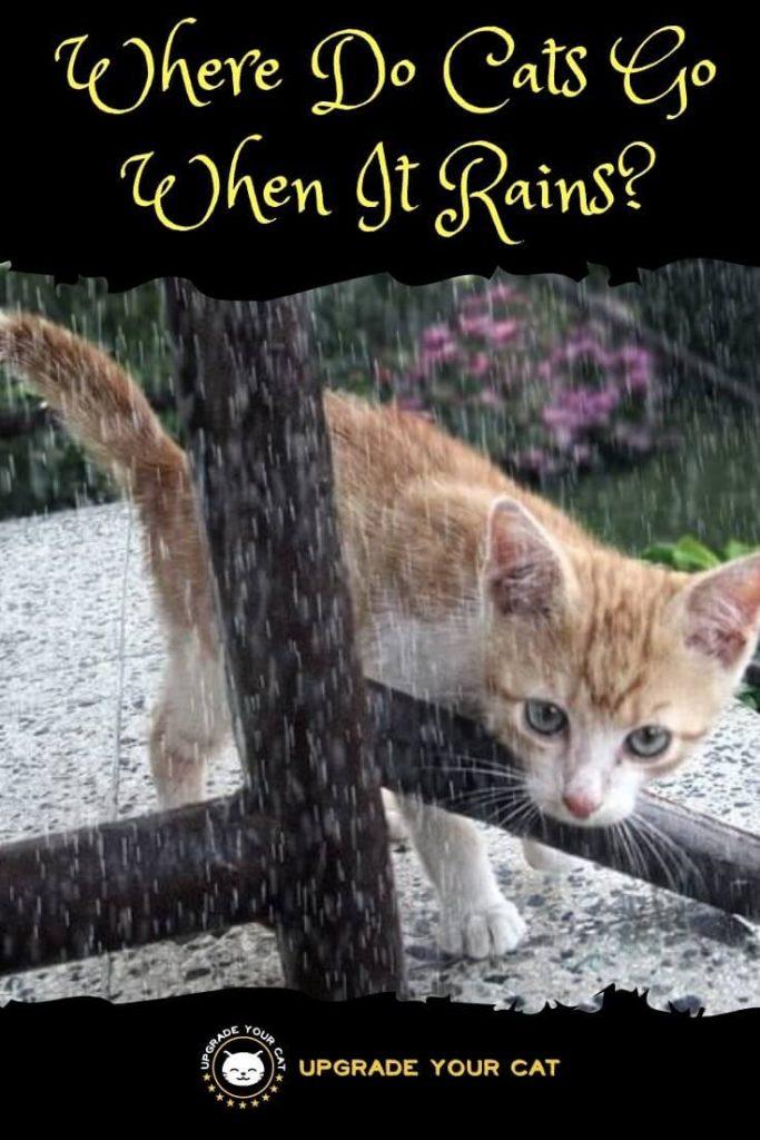 Where Do Cats Go When It Rains