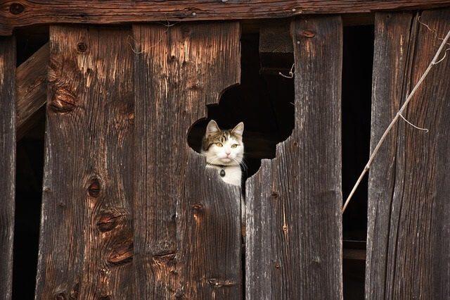 Where Do Cats Hide When It Rains